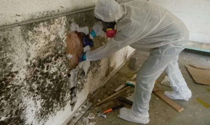 Black Mold Cleanup - How to Kill Mold